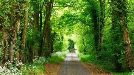春天,绿色,森林小径公园,阳光高端桌面精选 3840x2160