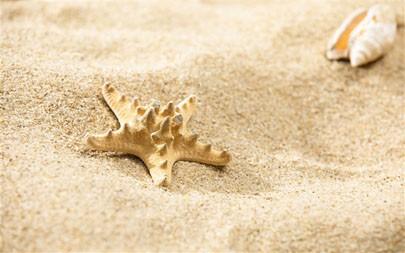 海星,海滩,2021年,夏季,5K,照片高端桌面精选 5120x2880