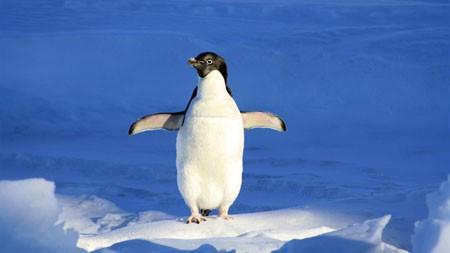 夏天,南极,冰川,日落,可爱的企鹅高端桌面精选 3840x2160