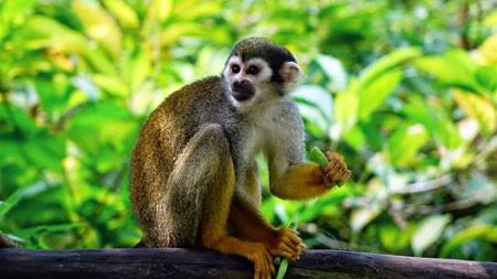 松鼠猴,森林,爬,动物,4K,照片高端桌面精选 3840x2160