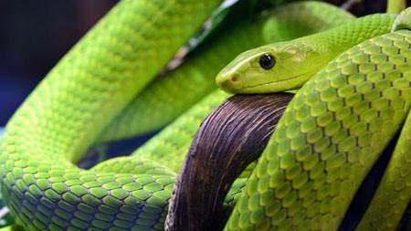 绿色,蛇鳞,2022,动物,高清,照片高端桌面精选 3840x2160