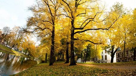 秋天,金黄,树林,落叶,河高端桌面精选 3840x2160