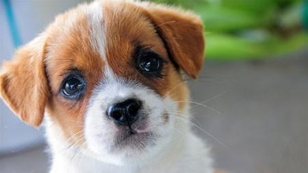 可爱,宠物,狗,肖像,动物,高清,照片高端桌面精选 3840x2160