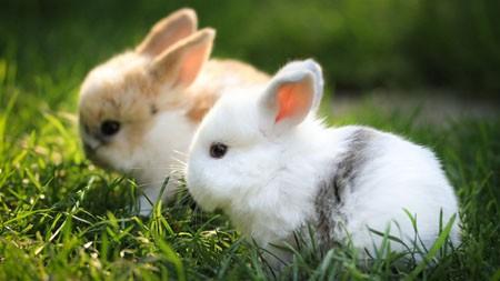 可爱的白兔子,2022,动物,高清,摄影高端桌面精选 3840x2160