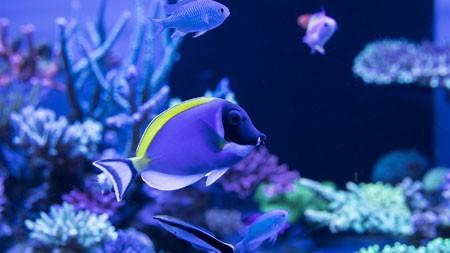 海洋观赏鱼,2022,动物,高品质,照片高端桌面精选 3840x2160