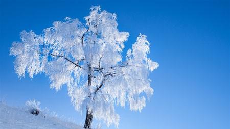 白树,冬季,蓝天,2022,自然,风景,照片高端桌面精选 3840x2160