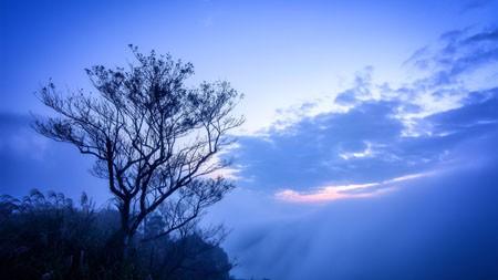 丛林,山,雾,干树,黎明,风景高端桌面精选 3840x2160