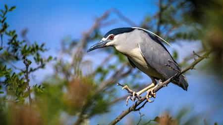 树,苍鹭鸟,2022,动物,高品质,照片极品壁纸精选 3840x2160
