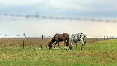 内蒙古,呼伦贝尔大草原,河流,野马高端桌面精选 3840x2160