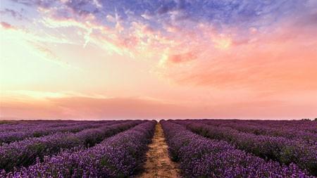 紫色,薰衣草田,2022,自然,风景,照片高端桌面精选 3840x2160