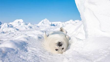 南极大陆海豹,2022,动物,高清,摄影高端桌面精选 3840x2160