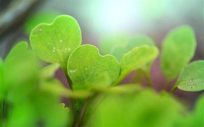 春天,新鲜,叶子,2021,自然植物,5K,照片高端桌面精选 5120x2880
