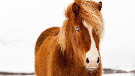 冬季,冰岛,马,动物,世界高端桌面精选 3840x2160