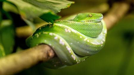 丛林,树枝,绿色,蛇,特写高端桌面精选 3840x2160