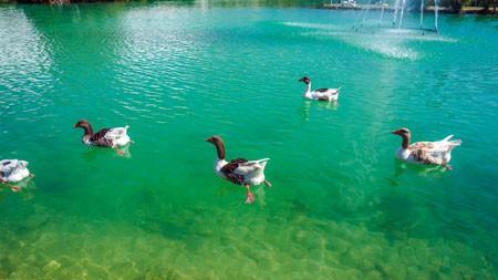 湖泊,鸭子,2022,动物,高品质,照片百变桌面精选 3840x2160