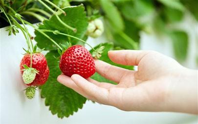 草莓,特写,2021,水果,5K,照片高端桌面精选 5120x2880