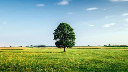 草原,农场,绿色,树,蓝色,天空高端桌面精选 3840x2160
