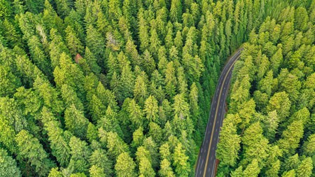 森林,树,路,鸟瞰,2022,风景,照片高端桌面精选 3840x2160