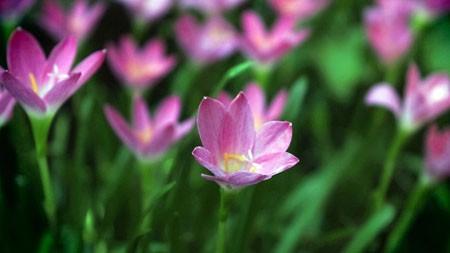紫,兰花,花,4K,高清,特写极品壁纸精选 3840x2160