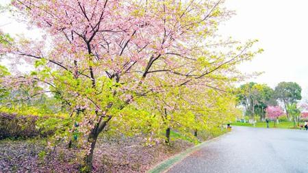 春天,公园,樱花,2021,高清,照片高端桌面精选 3840x2160