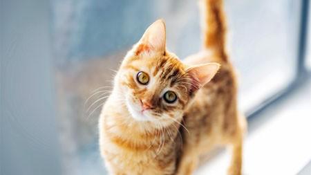 窗口,可爱,宠物,猫,特写,照片高端桌面精选 3840x2160