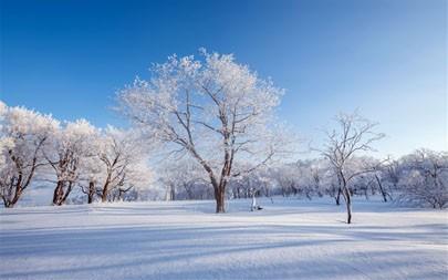中国,吉林,冬季,霜,松树,2021,自然,5K,照片高端桌面精选 5120x2880