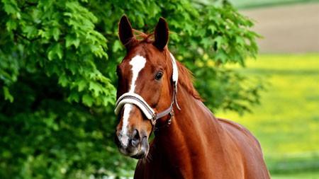 棕色,野马,野生动物世界,HD,特写高端桌面精选 3840x2160