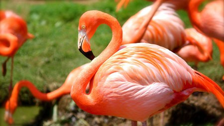 非洲,草原,河流,红色,火烈鸟,摄影高端桌面精选 3840x2160
