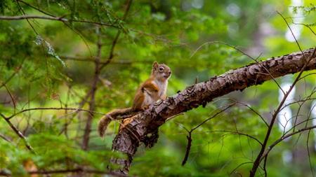 森林,松鼠,2022,动物,高清,照片极品壁纸精选 3840x2160
