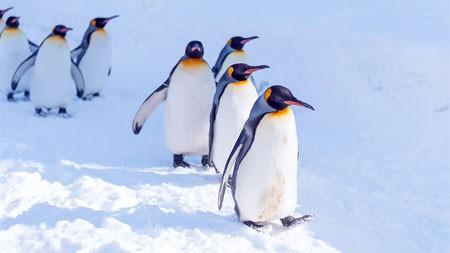 南极冰川,阳光,可爱,企鹅高端桌面精选 3840x2160