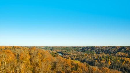 金色,森林,蓝色,天际线,4K,高清,照片高端桌面精选 3840x2160