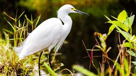 绿草,野生动物,小白鹭,动物,4K,照片高端桌面精选 3840x2160
