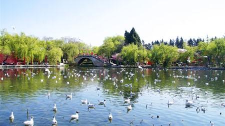 夏天,昆明,大观楼公园,湖鸟高端桌面精选 3840x2160