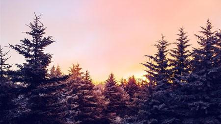 丛林,冬天,雪,云杉树,日落高端桌面精选 3840x2160