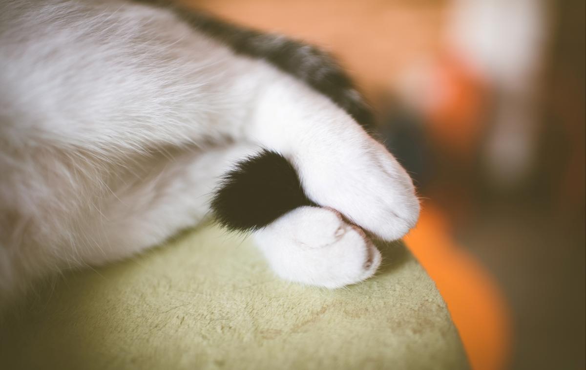 猫的尾巴,白色的爪子,猫咪4K高端电脑桌面壁纸