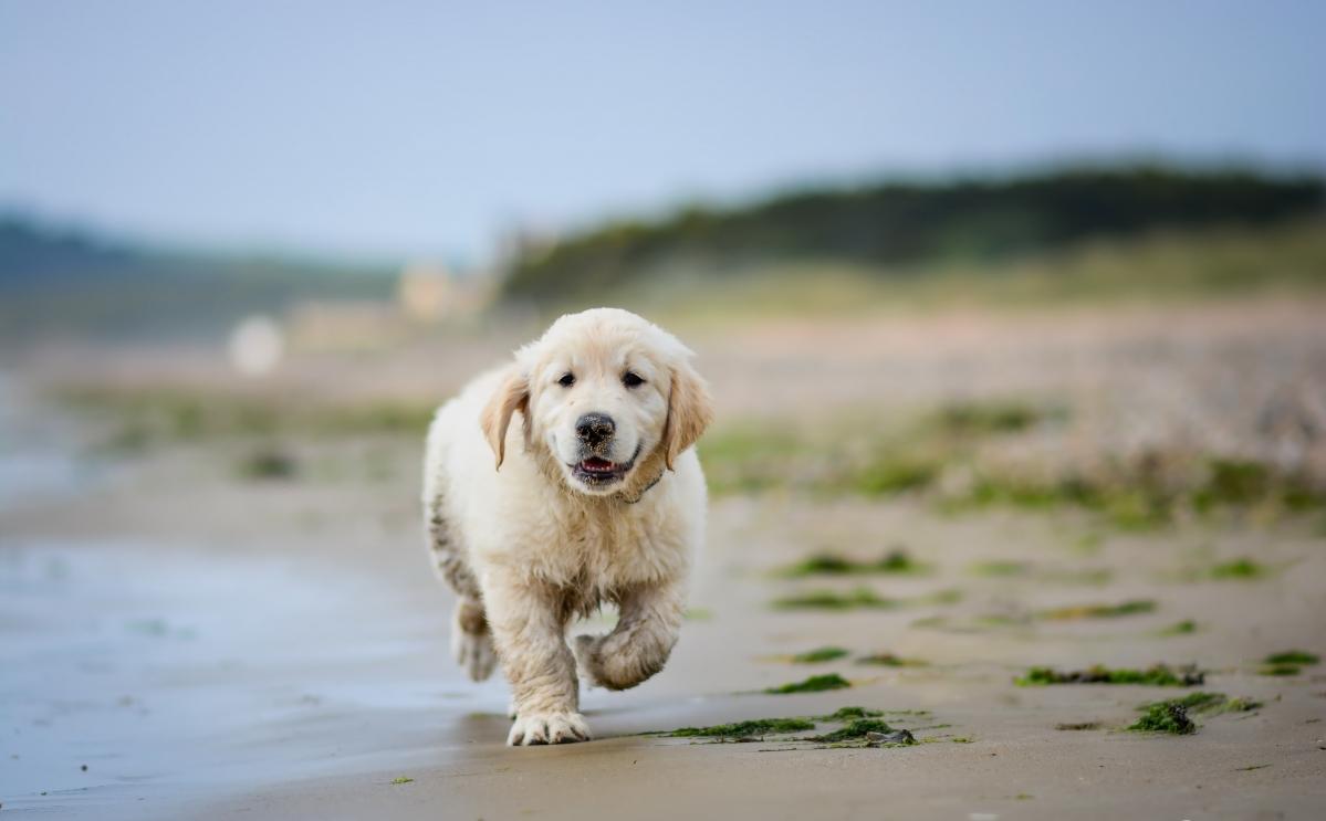 可爱小狗5K图片