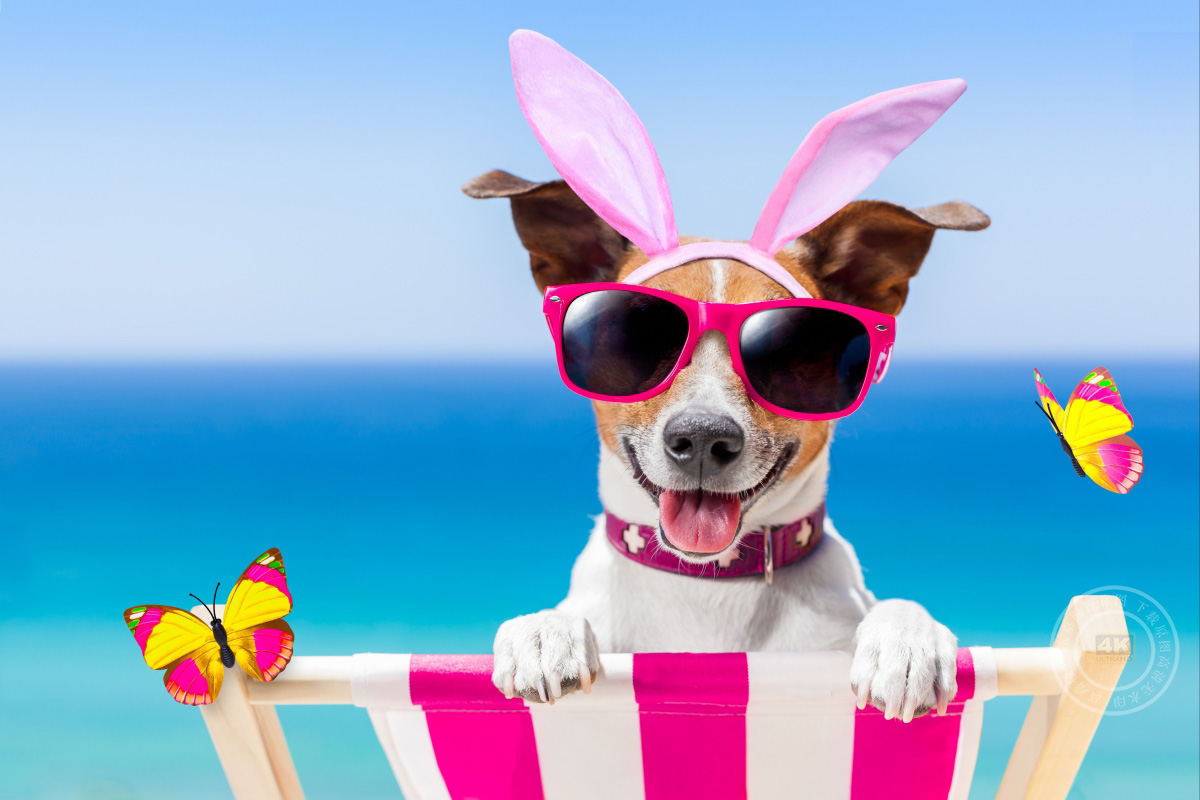 海滩,蝴蝶,太阳镜,兔耳朵,快乐的狗5K图片