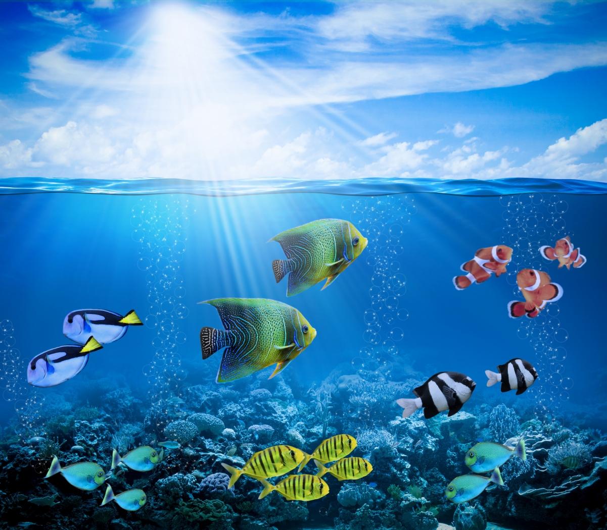 珊瑚礁,水下,海洋,鱼的照片