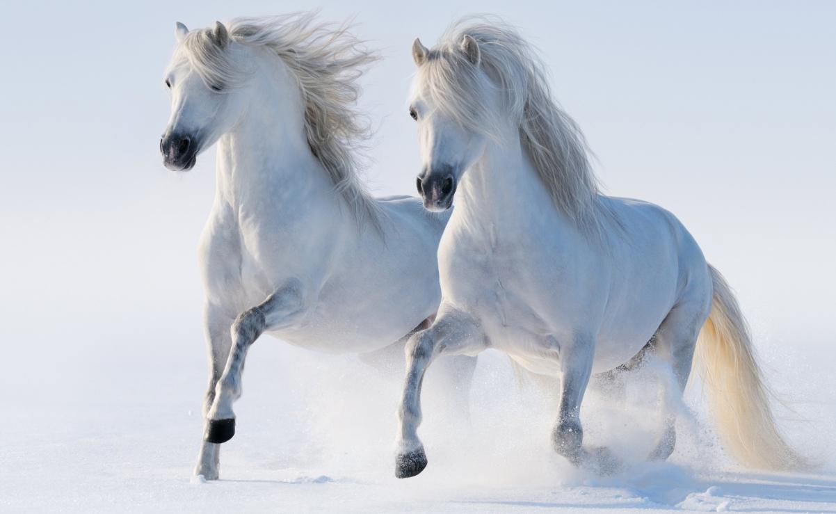 二匹马高清4K桌面高端电脑桌面壁纸