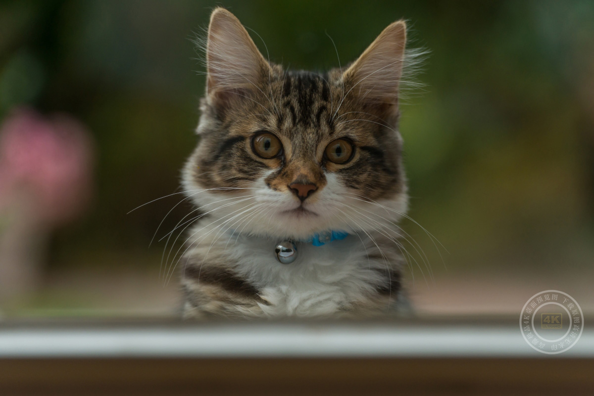 可爱的小猫照片4K高端电脑桌面壁纸