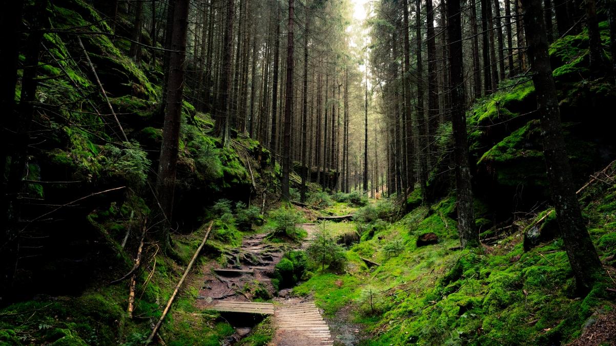 德国国家公园自然森林风景4K超清高端电脑桌面壁纸