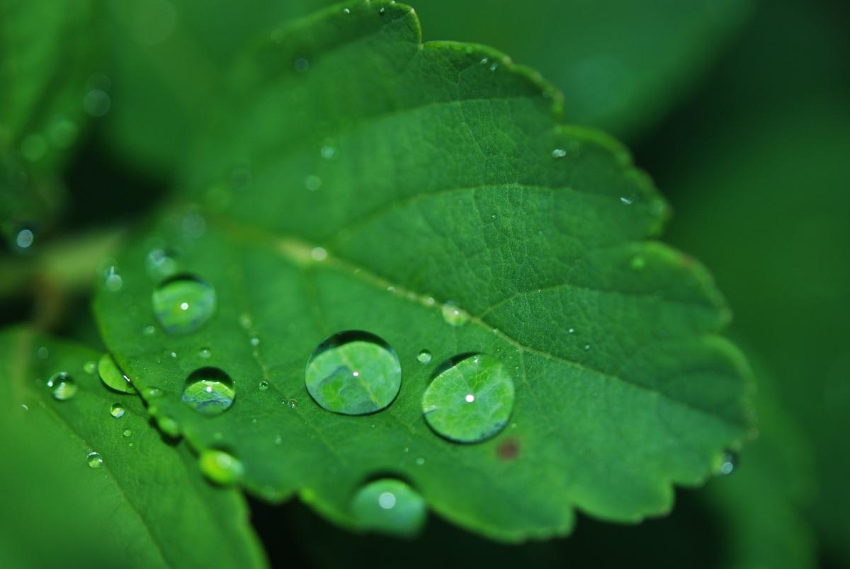 叶子 水滴 露水 自然 绿色 新鲜叶子 特写 植物 4K护眼高端电脑桌面壁纸