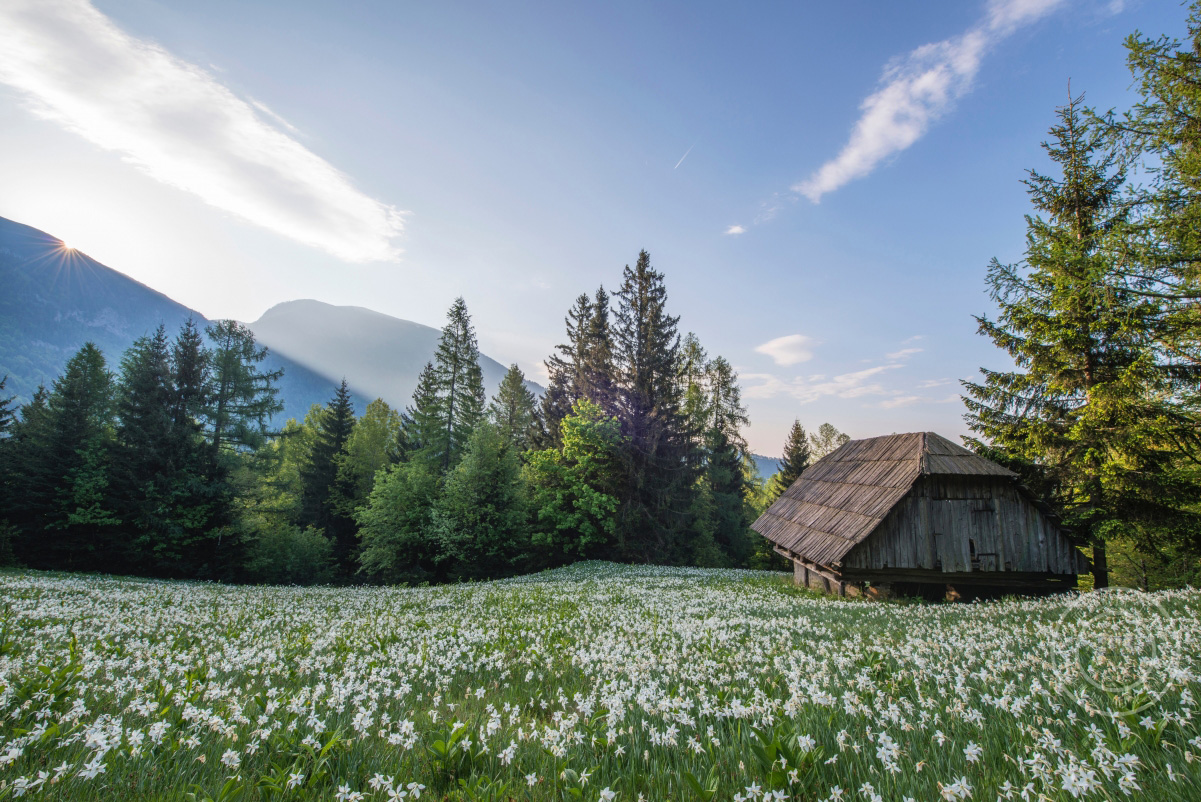 美丽的 山 树林 鲜花 木屋 4K风景高端电脑桌面壁纸
