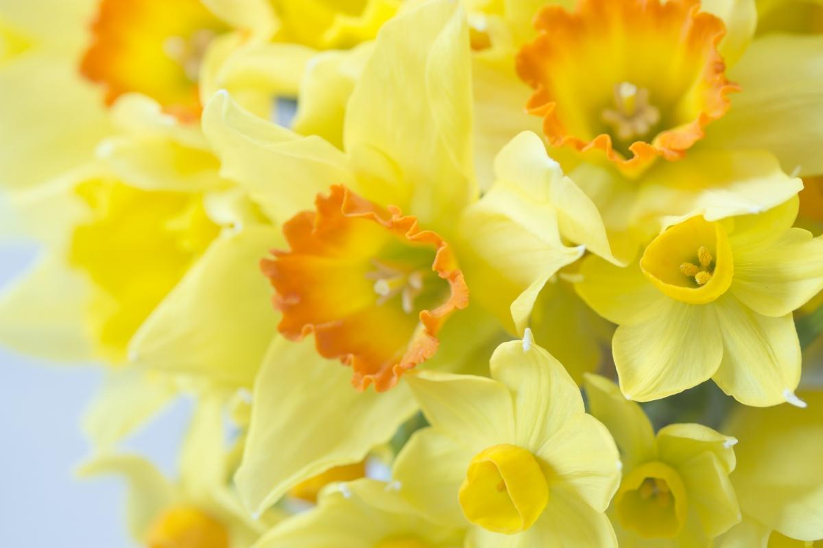 美丽黄色花朵4K高端电脑桌面壁纸