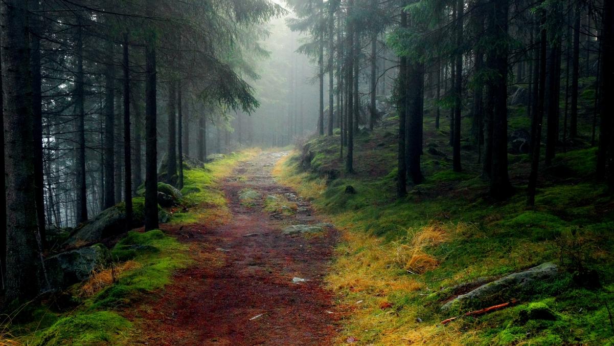 森林 树木 道路 5K风景高端电脑桌面壁纸