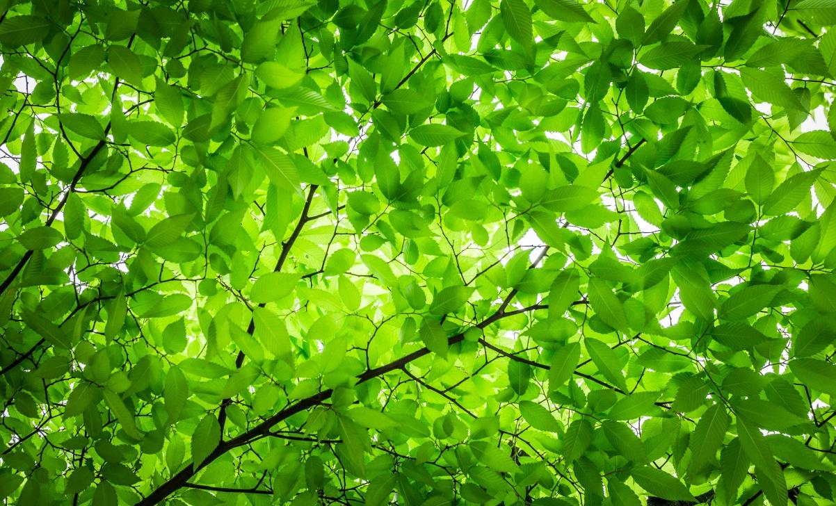 树叶 树枝 大自然 绿色 护眼4K高端电脑桌面壁纸