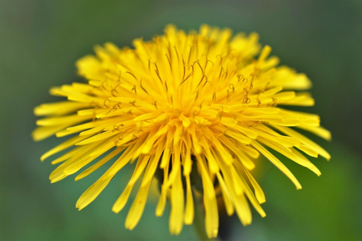 春天黄色的花5k图片