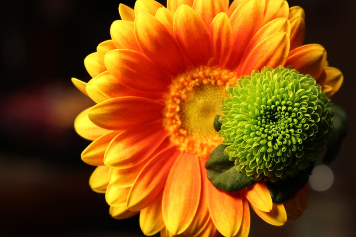 自然鲜花花瓣4k高端电脑桌面壁纸