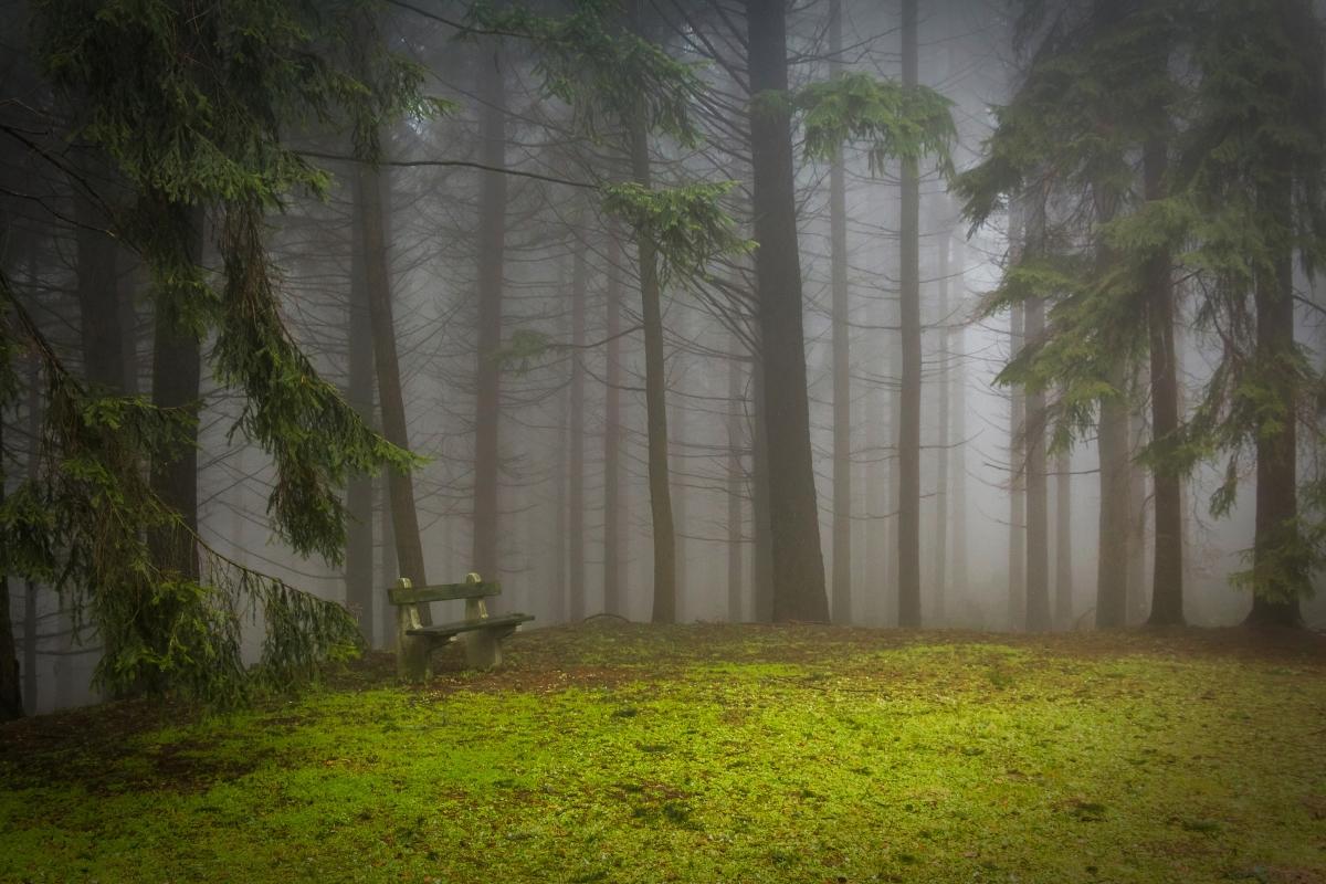 松树林 林间空地 迷雾 4k风景图片
