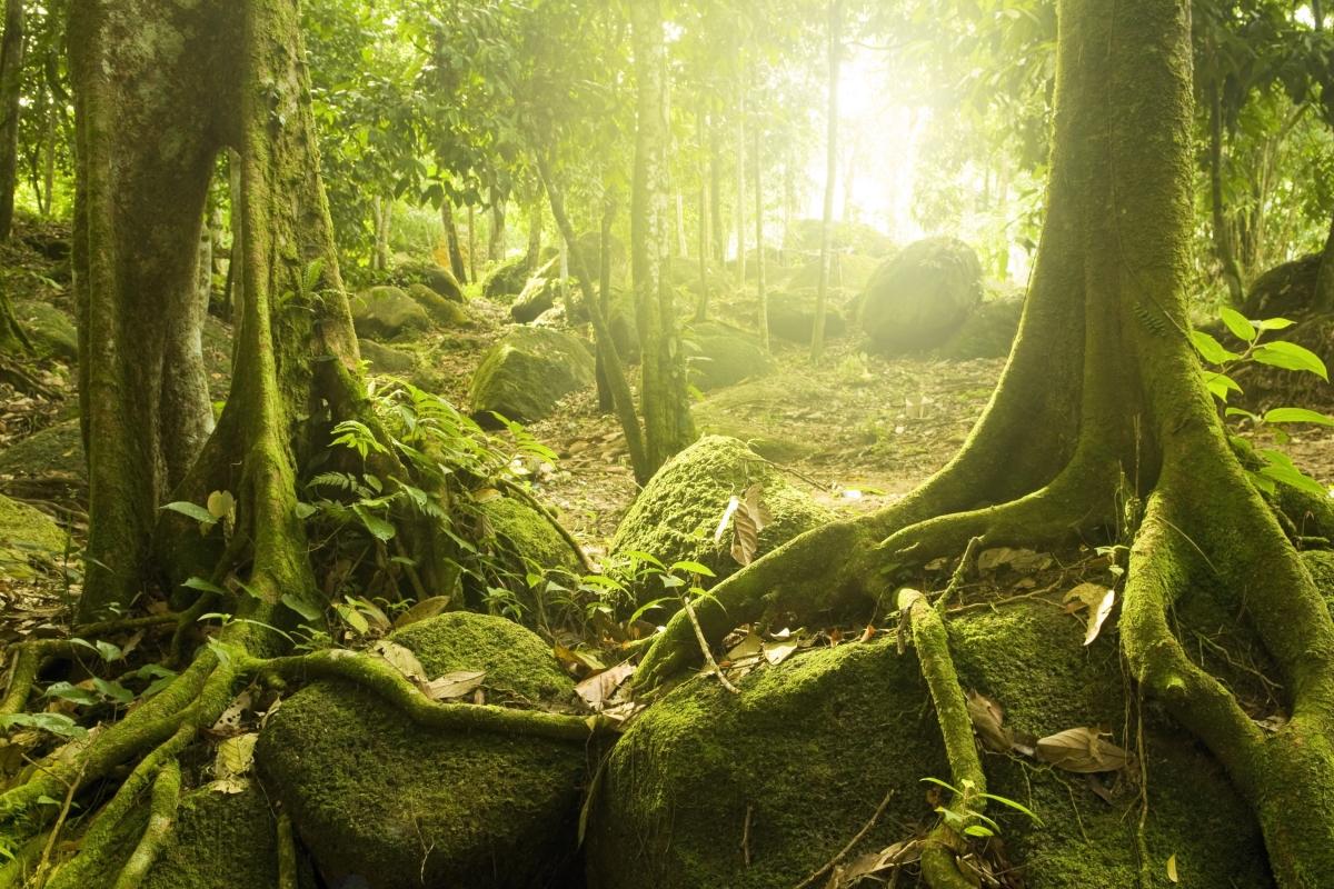 神秘的森林,太阳,树木,石头,苔藓,大自然风景图片